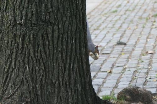 Squirrel with bagel