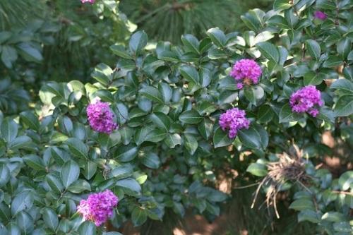 Purple Flowers Central Park 13 1 September 2012 (1024x683)
