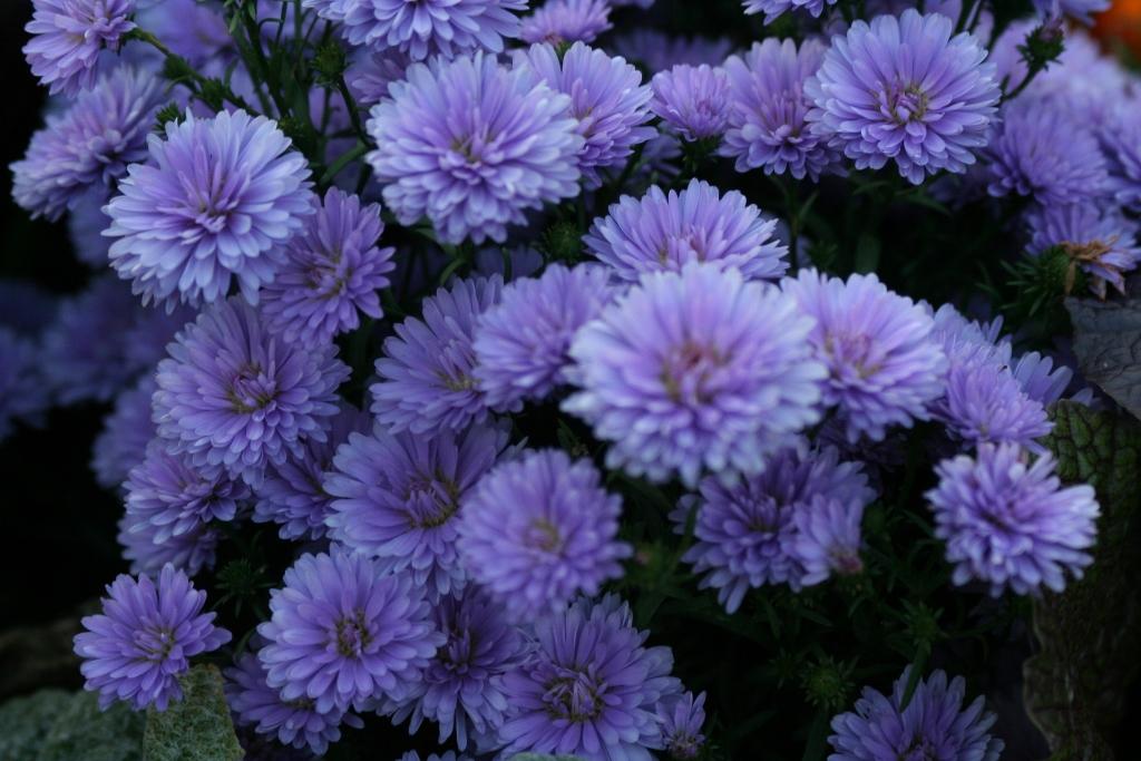 Purple Flowers Hyde Park 6 15 October 2012 1024x683