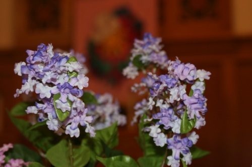 Estherville purple flowers