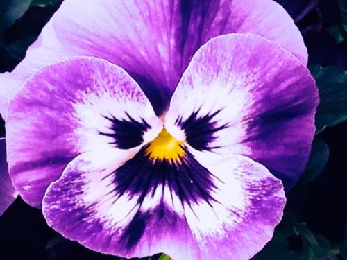 Purple flower face