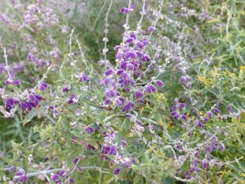 Purple Flowers Louisville November 9