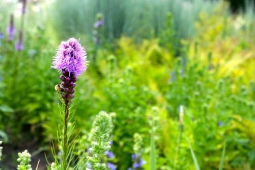 Purple Cha Aug 4 16